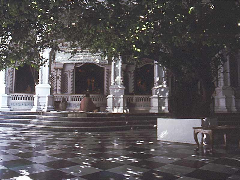 Tamal tree in the courtyard of the Krishna Balarama Mandira